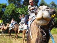 Rutas en dromedario Evecan Safari Aventura