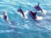 观看海豚在钓鱼