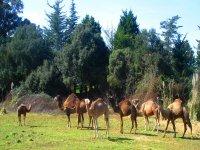 EVECAN SAFARI ADVENTURE  - 冒险单峰骆驼