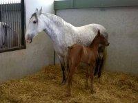 Potrillo y caballo en la finca de Toledo