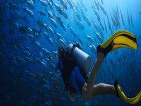 Buceo con los peces