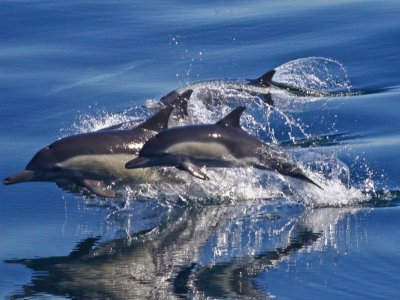 Canary Experience Avistamiento de Cetáceos
