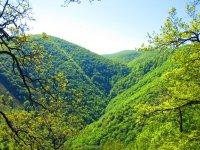 El verdor de nuestros paisajes