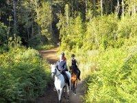 In the forest on horseback