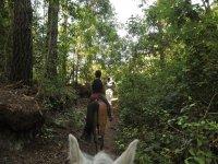 On horseback under trees
