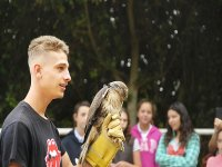 Falconry in the hipic camp