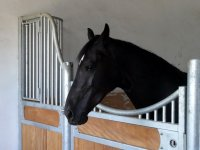 Horse in his box