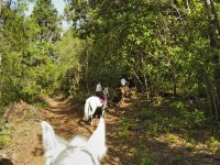 White-eared horse