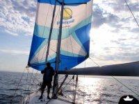 鲸类黄昏导航