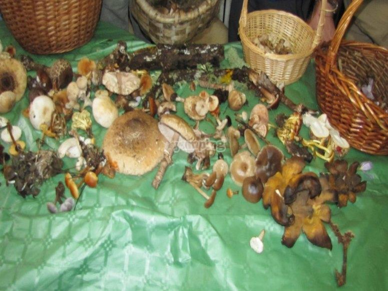 集合中的真菌学暴露
