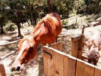 马和驴的宿舍