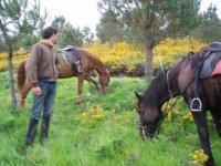 Un descanso para los caballos