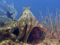 与章鱼相遇