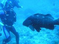 Incontri subacquei