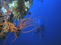 Introduzione alle immersioni subacquee