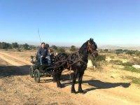 Paseo en coche de caballos