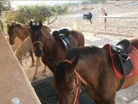 Caballos del centro de equitacion alicantino