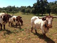 我们的奶牛