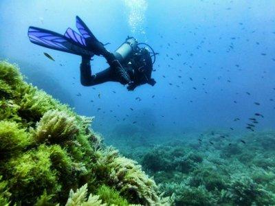 Aqua Mallorca Diving