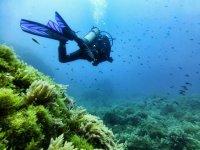 Buzo en el mar