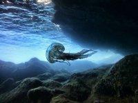 Medusa en el mar