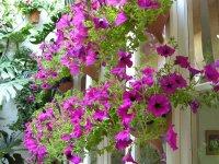 Patios floridos
