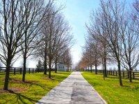 Asphalted road between trees