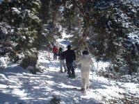 白雪皑皑的森林
