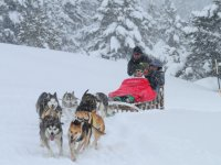 Mushing three-seater