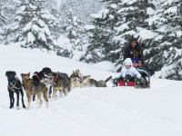 Family mushing ride