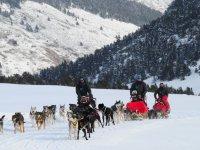 Departure with several dog sledges