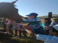 Nuestros amigos los caballos
