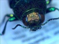 Muestra de insecto