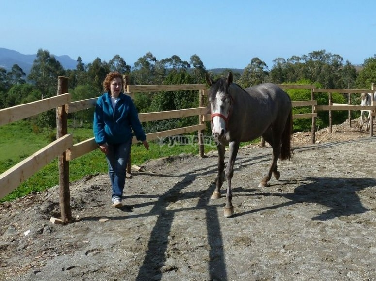 Conoce al caballo de una forma muy especial