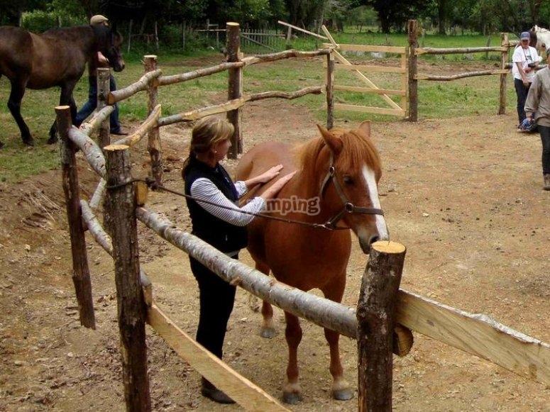 Comunicación con el caballo