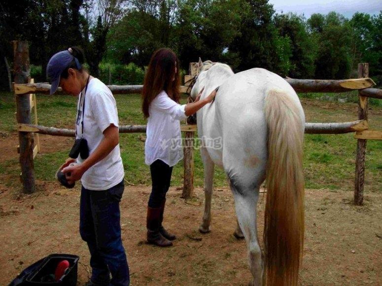 Cepillando y hablando al caballo