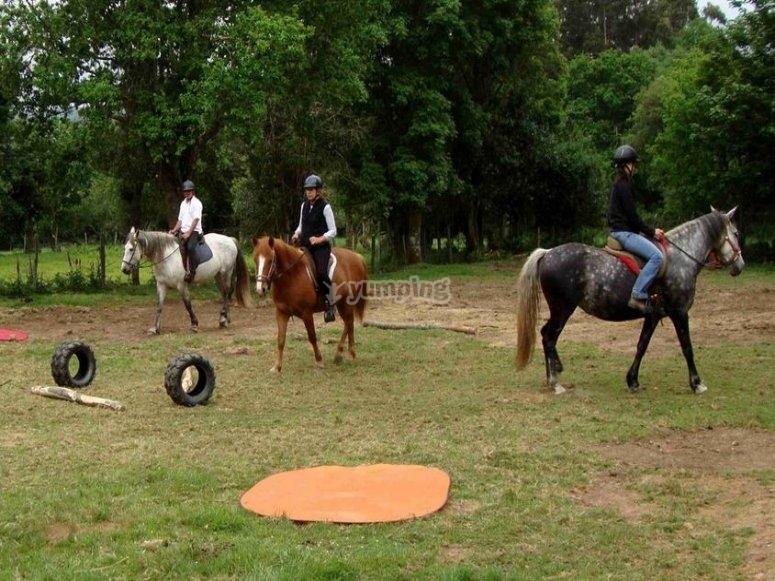 Llevando a los caballos por la pista de obstáculos