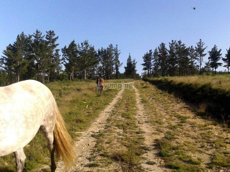 Entornos naturales a caballo