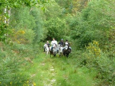 Ruta a caballo en Ponte Segado + snack, 3 horas