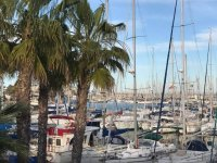 Boats and palm trees in the port