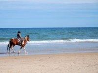 健康休闲骑马在海滩上在瓦伦西亚上涨