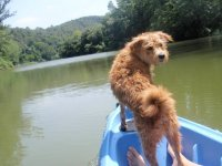 With the dog in the kayak