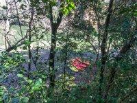 Kayaks tras los arboles en Girona