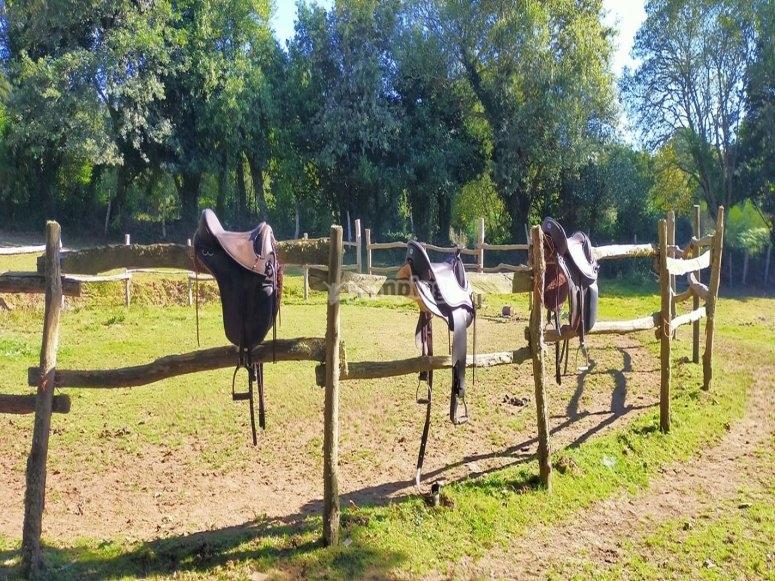 Monturas para las clases de equitación