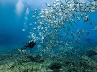 Buzo entre un espectacular banco de peces