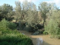 Stream in Antequera