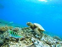 发现海洋潜水