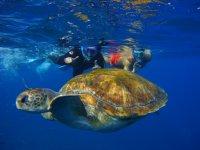 Las simpaticas tortugas de Tenerife