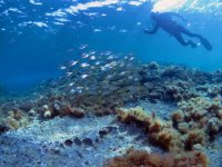 Bajando hacia el fondo del mar