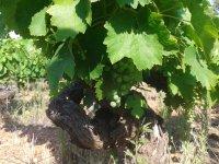 Tour the vineyards